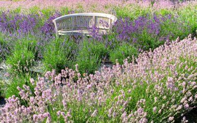 Pynt din have med en havebænk