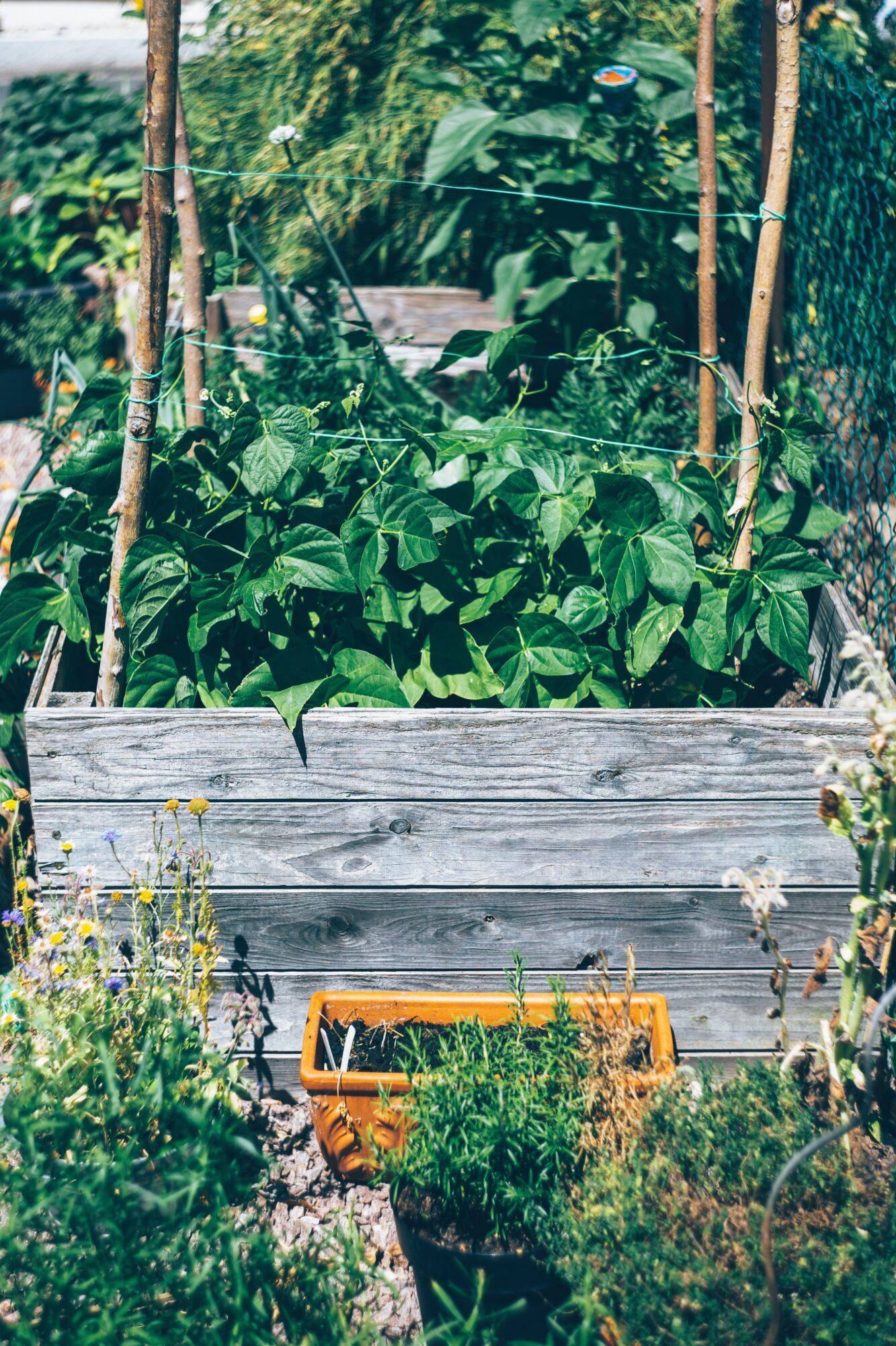 Flotte højbede og plantekasser til din have