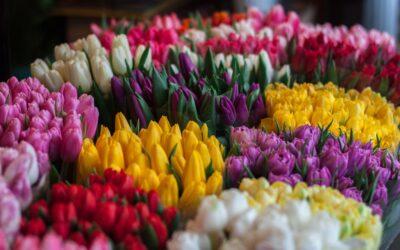 Giv hjemmet et pift med blomster